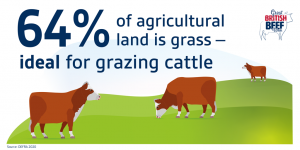 GBBW grazing cattle